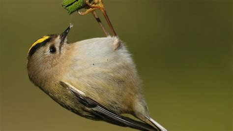 the rspb features what will birds be eating for their
