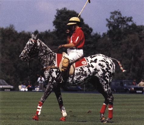 More Ponies For Polo by A Polo Player And Mount The Polo Pony Is Not Truly A
