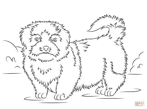 shih tzu coloring book shih tzu coloring page free printable coloring pages