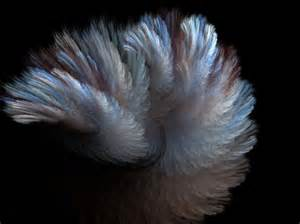Feather And Fur Fur And Feather Free Stock Photo Domain Pictures