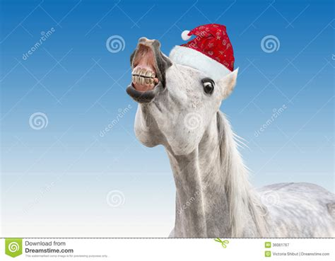 funny white horse with santa hat stock image image 36061767