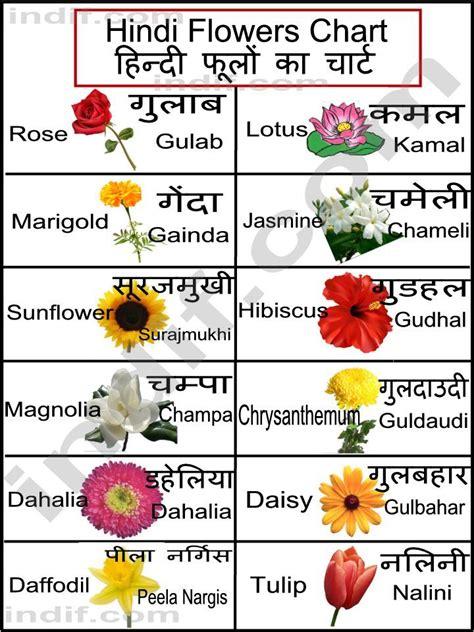 list of flowers hindi flowers chart learn hindi pinterest flower