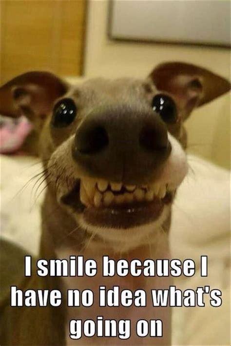 Overbite Dog Meme - lol overbite dogs funny pictures pinterest dog memes