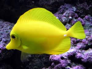 what color are fish color fish hd wallpaper