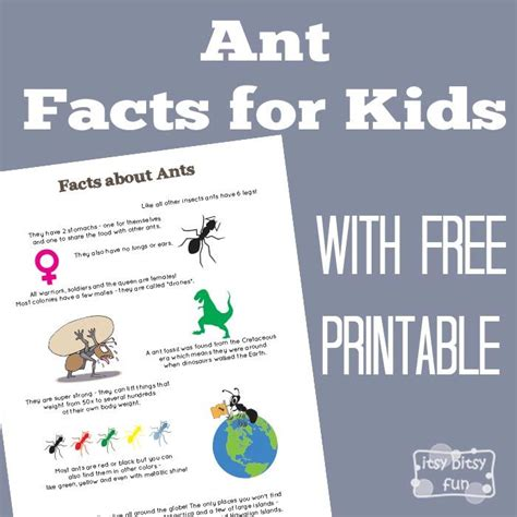 17 best images about ants on activities comprehension and student