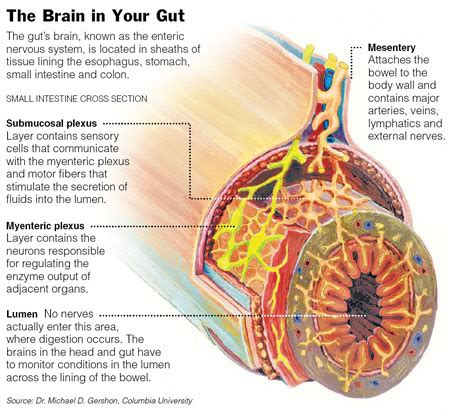 gut intelligence the wisdom to the the guts to do something about it books sanesco health the gut brain relationship