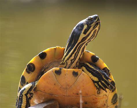 vasco immagini da scaricare immagini animali da scaricare gratis sfondi desktop di