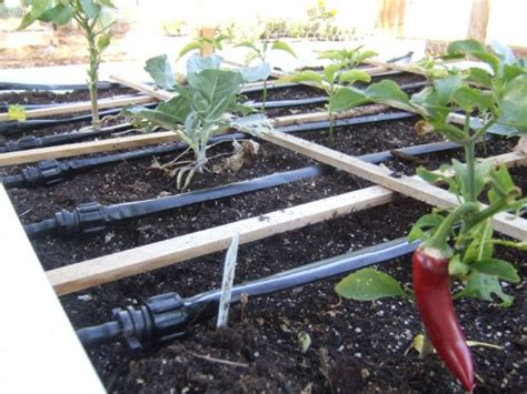 drip irrigation for raised beds raised bed vegetable growing