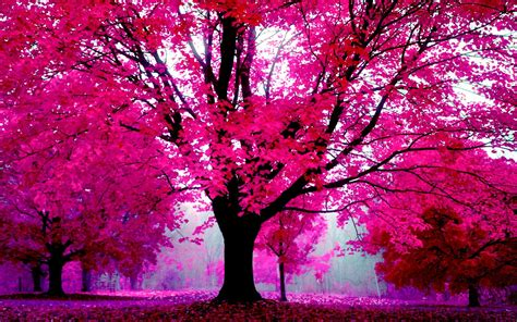 5 nature in pink forest trees wallpaper 447 trees in nature