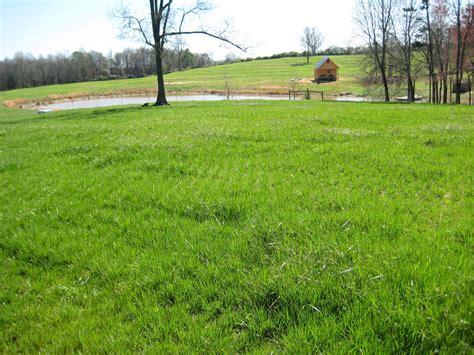 garden grass types 5 popular grass types in nashville tn lawnstarter
