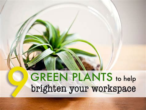 plants for office 9 low maintenance plants for the office 9 low maintenance