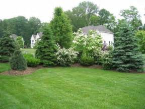 evergreen landscaping best 25 evergreen trees landscaping ideas on