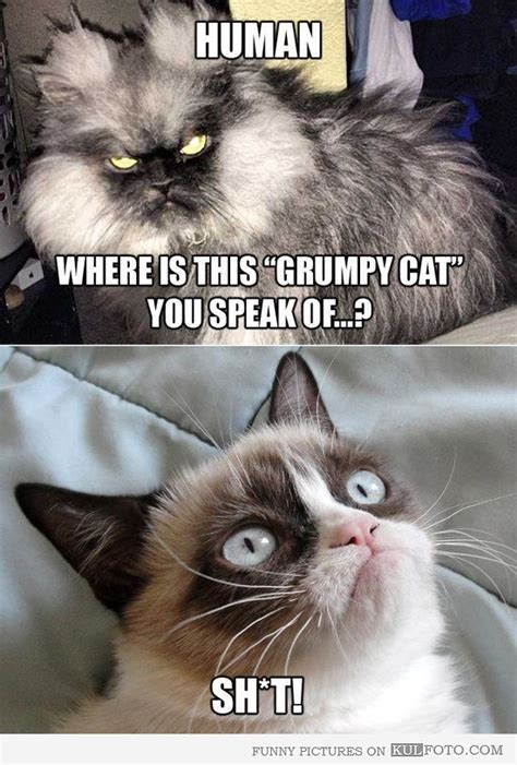 Cat Meow Meme - where is the grumpy cat scary cat colonel meow asking
