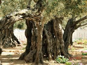 blue eyed ennis the garden of gethsemane 2012