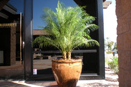 indoor plants gallery the potted plant scottsdale scottsdale indoor plant landscaping gallery the potted