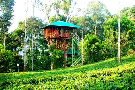 treehouse honeymoon catcher plantation resort munnar kerala hotel