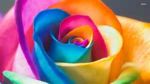 colored roses your wallpaper page 260