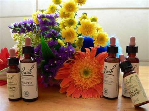 imagenes flores bach 191 d 243 nde comprar flores de bach qu 233 son para qu 233 se usan