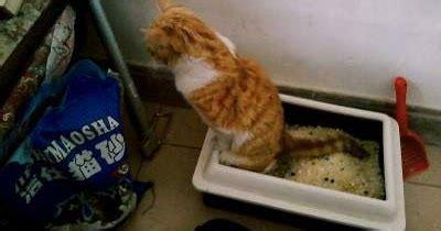 Jual Pasir Zeolit Kucing Jakarta jual silica gel untuk pasir kotoran kucing adywater