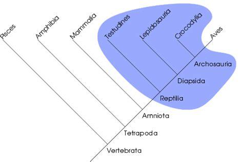 Define Tree parafyletismus wikipedie