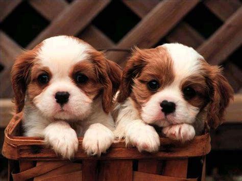 wallpaper background puppies animals zoo park 8 cute puppies wallpapers cute puppy