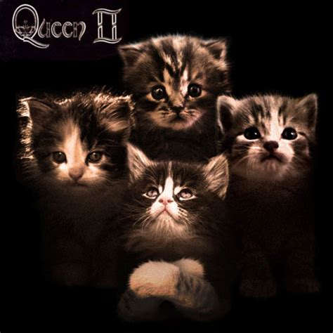 Cat Cover by Cat Album Covers Memes