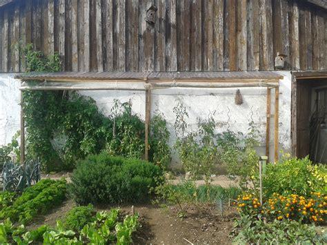 ratgeber anleitungen und kaufberater tomatenhaus