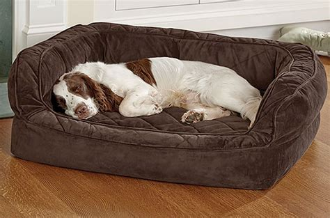 dog digging couch 10 best beds for dozy dogs