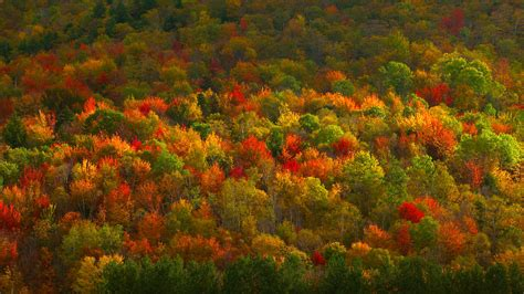 autumn forest   top    forest