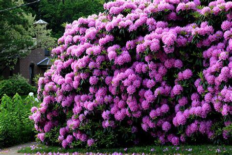 rhododendron greg miller birding