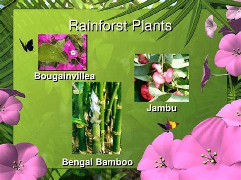 names of plants in the tropical rainforest rainforest habitat