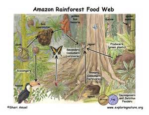 Tropical rainforest biomes of planet earth