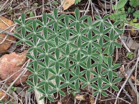 flower of life pattern in nature was uns die natur 252 ber heilige geometrie lehren kann