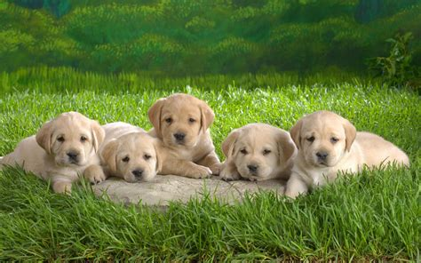 30 Gambar Anak Anjing Yang Lucu lucu ~ Dangstars?