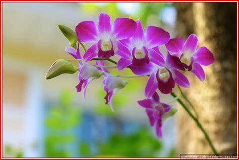 imagenes de rosas lindas para descargar imagenes de flores bonitas para descargar gratis