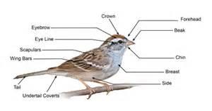 image gallery identify wild birds