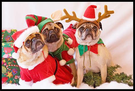 imagenes feliz navidad con perros comidas para perros navidad i se admiten mascotas