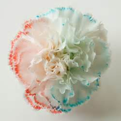 color changing flowers color changing flowers