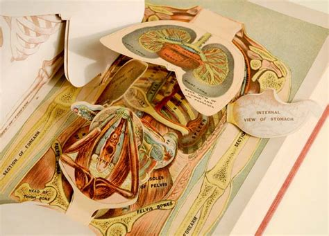 libro my pop up body book animated anatomies an exhibition of antique medical pop up books