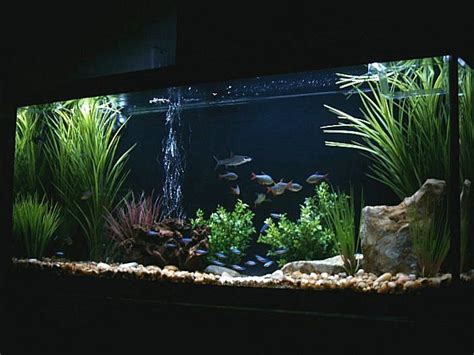 aquarium decoration ideas freshwater 25 best ideas about aquarium setup on pinterest fish in