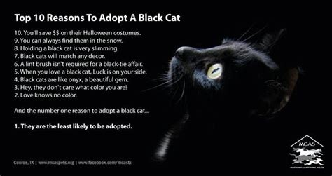 Top 10 Reasons To Adopt A by Top 10 Reasons To Adopt Black Cats I Black Cats