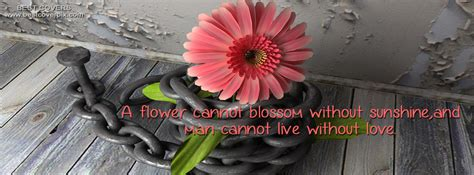 flower fb cover photo