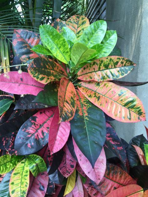 schöne große zimmerpflanzen sch 246 ne zimmerpflanzen frische ideen f 252 r die dekoration im