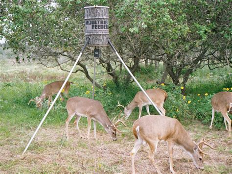 secrets to hunting feeder bucks in states where feeders