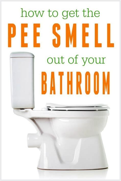 how to get pee smell out of bathroom mejores 30 im 225 genes de cleaning pests en pinterest