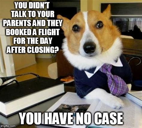 Lawyer Dog Meme - 20 memes to get you through residence hall closing
