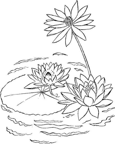 coloring page water lily free coloring pages of water lily