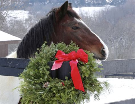 how to host an open house how to host a holiday open house the 1 resource for horse farms stables and riding