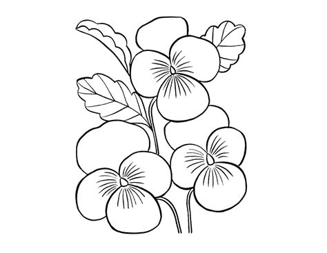 coloring pictures of beautiful flowers colour drawing free hd wallpapers beautiful flowers for