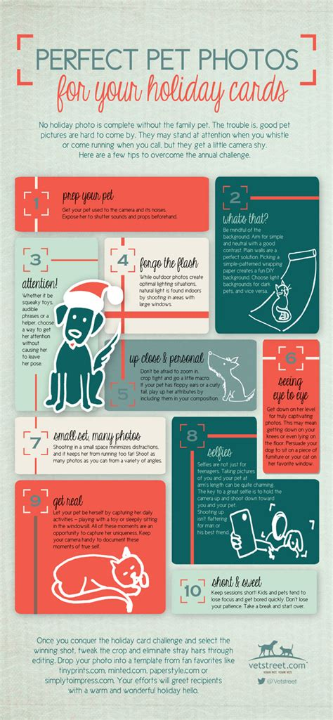 how to take a picture of a christmas tree how to take the best or cat photos for cards infographic